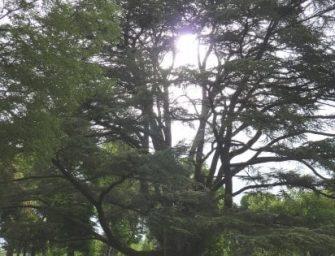 Emilia-Romagna, svolta green: 4,5 milioni di alberi