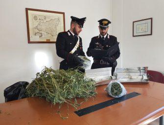 Bologna, sequestrati 105 kg di marijuana