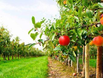 L'Emilia-Romagna ha perso il 43% dei frutteti in 20 anni
