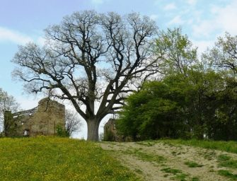 Verdi, vecchi e saggi: 106 alberi monumento
