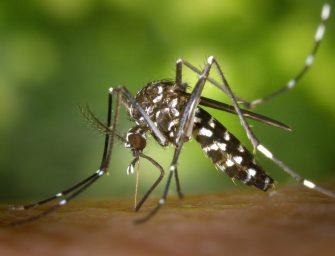 In Emilia la lotta alla zanzara tigre