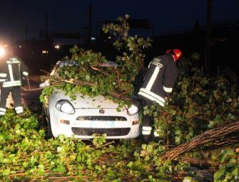 Modena. Forte vento, alberi caduti sulle auto