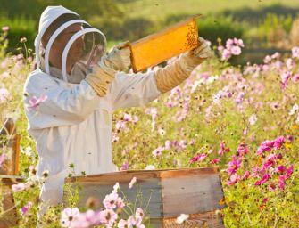 L'Emilia a difesa di apicoltura e 'api italiane'