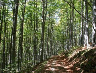 L'Emilia punta sui suoi boschi e sulle sue foreste