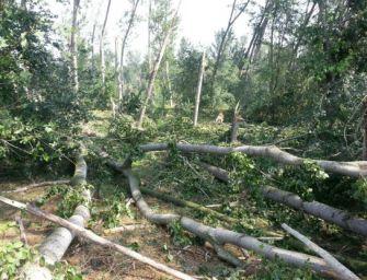 Pioggia e forti raffiche di vento, danni nel Bolognese