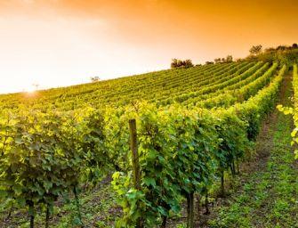 L'Emilia investe 250 milioni sulla green economy