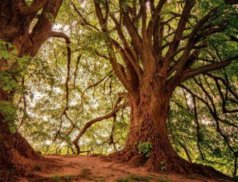Il 21 novembre è la Festa dell'Albero