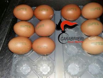 I Nas sequestrano 8 milioni di uova scadute