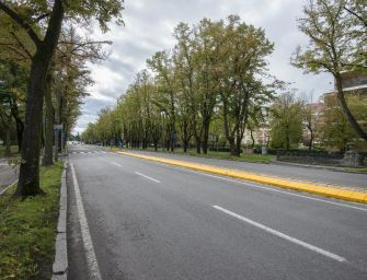 Reggio, viale Umberto: presentati in Commissione gli esiti della perizia sul verde