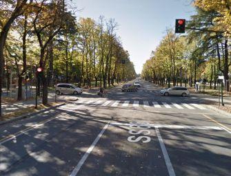 Reggio. Rec su progetto alternativo in viale Umberto I: salviamo quei 75 alberi