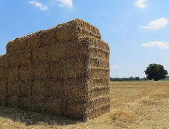 Agricoltura emiliana, 1,2 miliardi per sviluppo e svolta digitale