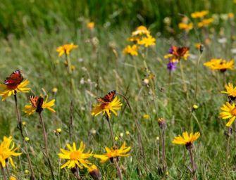Biodiversità, 10 milioni dalla Regione