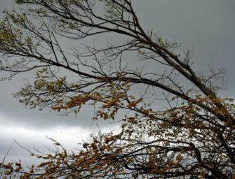 Allerta meteo per vento forte sull'Emilia