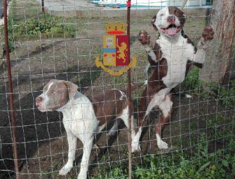Sassuolo: maltrattò i propri cani, 25enne condannato a pagare 30mila euro