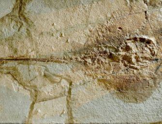 Individuate prime uova fossili di razza di mare: hanno 50mln anni