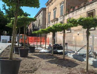 Reggio. Il verde in piazza Roversi