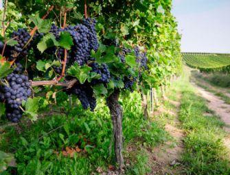 Dalla Regione 6,7 milioni per la promozione del vino
