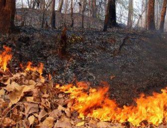 Incendi boschivi, la Regione dà il via alla fase di attenzione