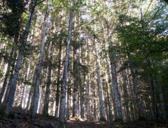 La Regione investe 5,5 milioni per i boschi emiliani