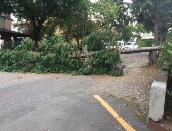Maltempo, tempeste di vento e nubifragi: danni e disagi in tutta l'Emilia-Romagna