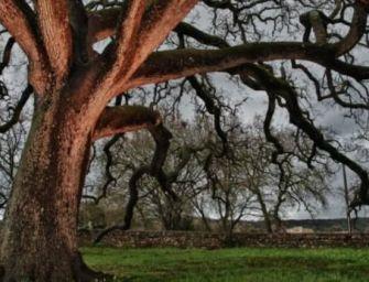 Petrini: 60 milioni di alberi, 1 per italiano