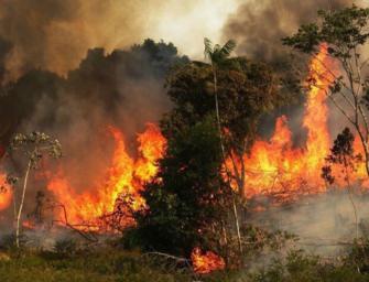 Brucia ancora la foresta amazzonica