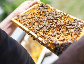 Dalla Regione Emilia-Romagna 560mila euro di aiuti per gli apicoltori