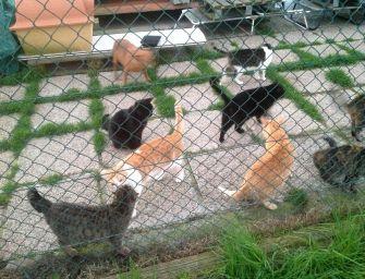 Canile e gattile di Reggio, il Comune su Iva e affidamento della gestione