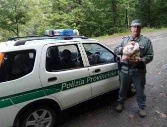 Fanano. La polizia provinciale sequestra 3 kg di funghi
