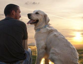 Cane e uomo, una relazione importante