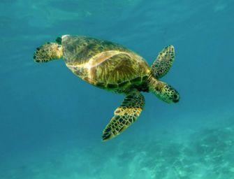 Nasce centro di cura per le tartarughe