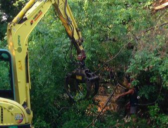 Reggio. Verde pubblico, 'prevista la rimozione di 2 alberi instabili'