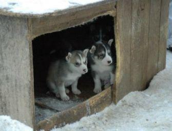 Ricoveri per animali abbandonati, 900mila euro dalla Regione