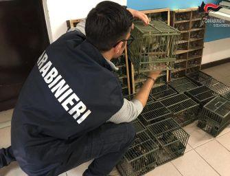Blitz alla Fiera ornitologica di Reggio, sequestrati 235 uccelli