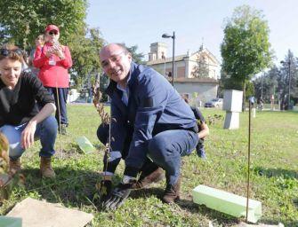 Reggio, 1065 nuovi alberi da piantumare