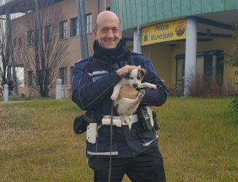 Si serve di un cucciolo di husky per la carità, 'salvato dai vigili'