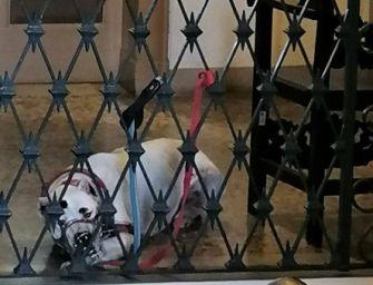 Castelnovo Sotto. Il veterinario lascia il cane mordace in Comune. La replica del sindaco