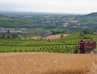 Emilia investe su qualità vino e innovazione