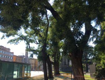 Reggio. Ai Giardini il ramo di sofora ha ceduto per stress causato da temporali