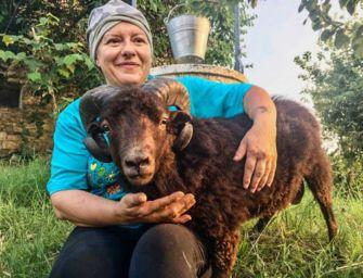 Muflone da giardino e alpaca da salotto: animali 'strani', è boom nel Reggiano