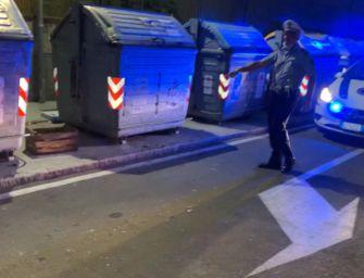 Modena, pappagalli abbandonati e salvati dalla polizia locale e Pettirosso