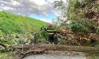 Vento forte: alberi sradicati e rami spezzati, 120 interventi tra Reggio e Parma