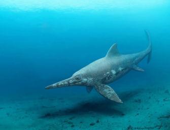 In Appennino trovati i resti di un ittiosauro