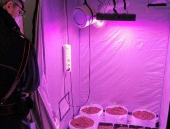 """Dozza. Avevano marijuana e una """"serra"""" di piante di cannabis in casa: denunciate due persone"""