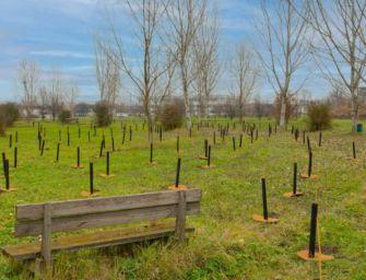 Campagna Mosaico Verde, 850 nuovi alberi a Reggio