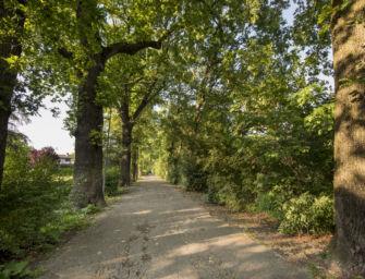 Reggio. Cura del verde pubblico, serve un piano complessivo