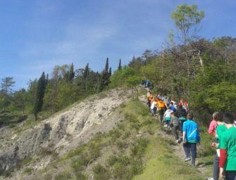 Aperto il bando per la gestione del parco Pineta a Vezzano sul Crostolo