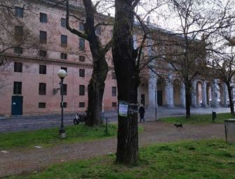 Reggio, Pellini: inizia con l'abbattimento di 2 sofore del Giappone la riqualificazione del Parco del Popolo