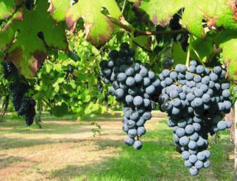 Dal bando Ocm 6,2 milioni di euro per la promozione dei vini dell'Emilia-Romagna nei paesi extra-Ue