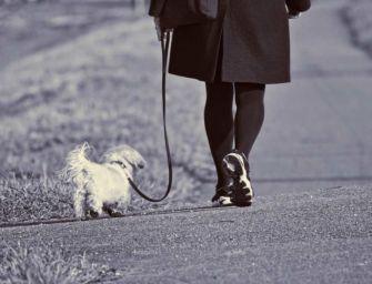 Cavriago per il benessere di cani e gatti